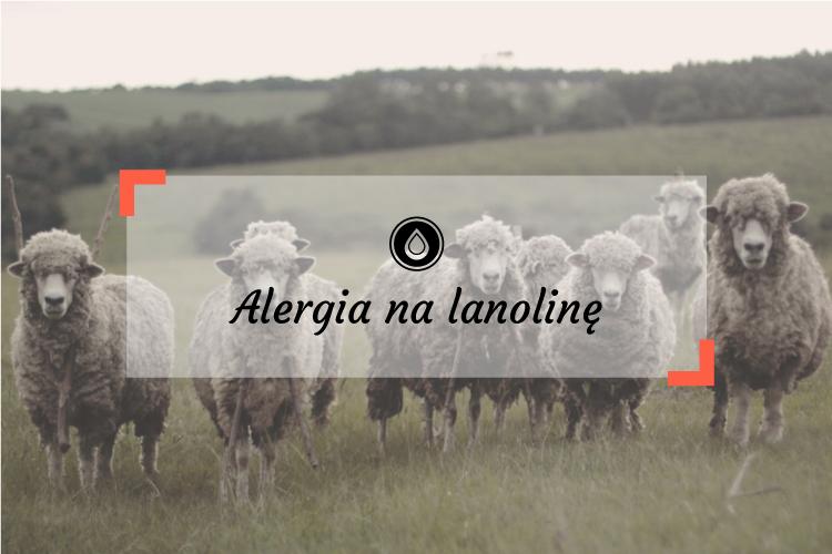 Alergia na lanolinę – czego unikać, gdzie znajdziesz lanolinę